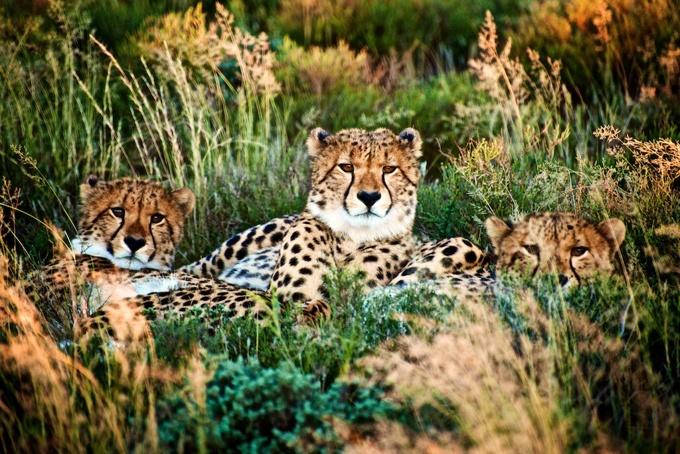 南非动物大迁徙之旅 (1).jpg