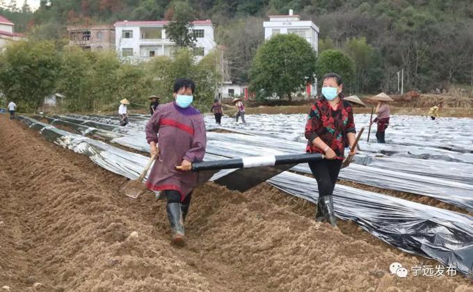 2月13日,在宁远县湾井镇梅子窝村,在农民在盖地膜。.png