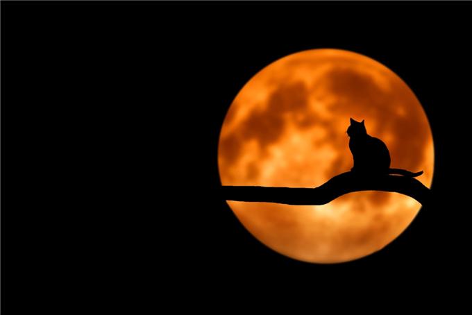animal-branch-cat-35888.jpg