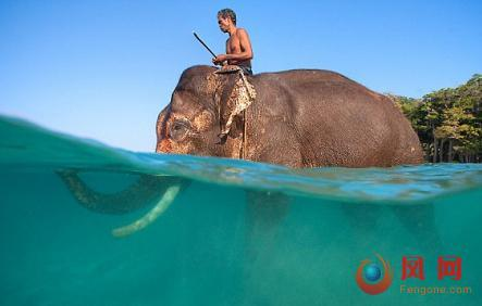 会游泳的大象 退休