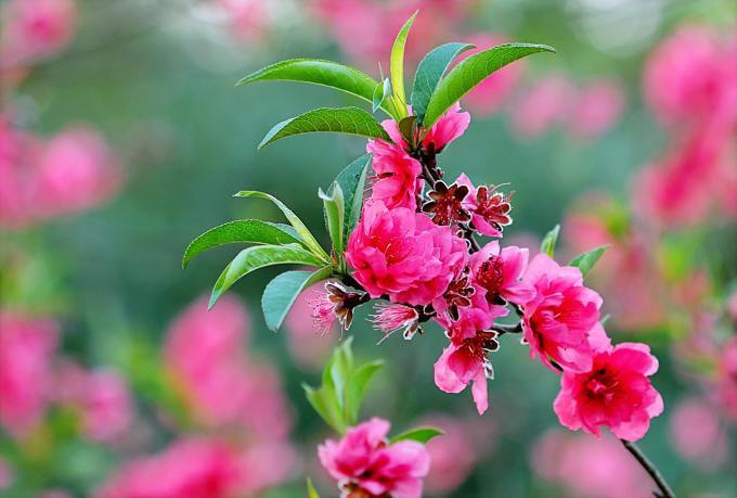 pink-flowers-641559.jpg