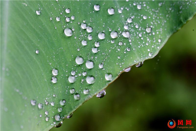 谷雨 镜头