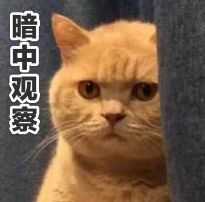 璐小凤侃世界:好气!市民当街宰杀白海豚 你们的良心不会痛吗?