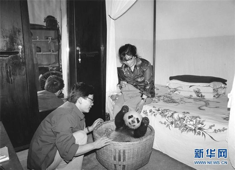 熊猫 萌宠 照片
